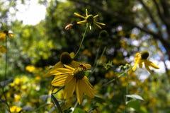 Flores y las abejas con el fondo borroso Imágenes de archivo libres de regalías