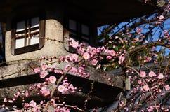 Flores y linterna, Kyoto Japón del albaricoque japonés Foto de archivo libre de regalías