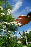 Flores y mano Imagen de archivo libre de regalías