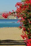Flores y mar Fotos de archivo