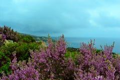 Flores y Mar Egeo Fotos de archivo libres de regalías