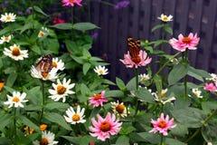 Flores y mariposas Fotos de archivo