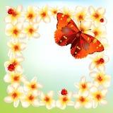 Flores y mariposas Imagen de archivo libre de regalías