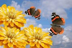 Flores y mariposas amarillas Fotografía de archivo