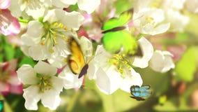 Flores y mariposas florecientes,