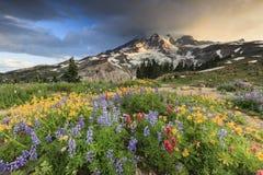 Flores y montaña fotos de archivo