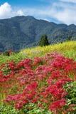 Flores y montaña rojas fotos de archivo