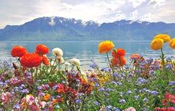 Flores y montañas de la primavera Foto de archivo libre de regalías