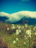 Flores y montañas, isla Lofoten Noruega de Gimsoya imagenes de archivo