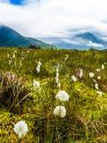 Flores y montañas, isla Lofoten Noruega de Gimsoya foto de archivo libre de regalías