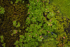 Flores y musgo del pantano Foto de archivo libre de regalías