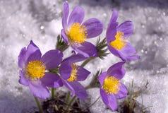 Flores y nieve Imagen de archivo libre de regalías