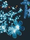 Flores y noche fotografía de archivo libre de regalías
