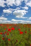 Flores y nubes de la amapola Fotos de archivo libres de regalías
