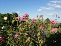 Flores y nubes en un día caliente fotografía de archivo libre de regalías