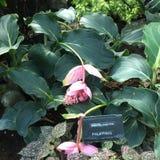 Flores y ornamental de la orquídea fotografía de archivo
