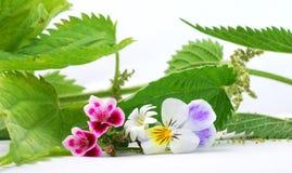 Flores y ortiga de la primavera Imágenes de archivo libres de regalías