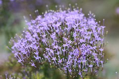 Flores y oruga Imágenes de archivo libres de regalías