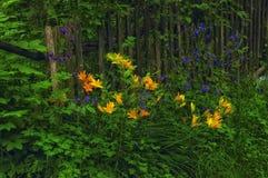 Flores y otras del lirio cerca de la cerca imagen de archivo