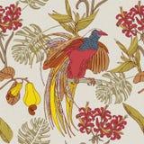 Flores y pájaros tropicales del drenaje de la mano Fotografía de archivo
