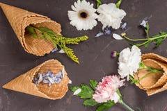 Flores y pétalos hermosos del flor en conos de la oblea en negro Imagen de archivo
