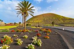 Flores y palmeras a lo largo de un camino al pueblo de Yaiza Imagen de archivo