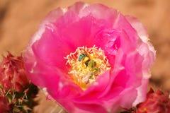 Flores y pinturas macras Foto de archivo