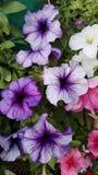 Flores y plantas Fotografía de archivo