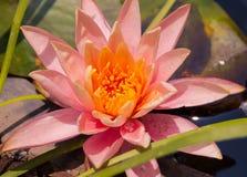Flores y plantas fotos de archivo libres de regalías