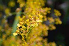 Flores y plantas Foto de archivo libre de regalías
