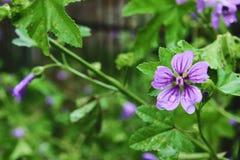 Flores y plantas en Fabriano Imagen de archivo