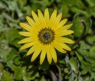 Flores y plantas, punto del cabo Fotos de archivo