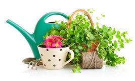 Flores y plantas verdes para cultivar un huerto con los utensilios de jardinería Imagen de archivo