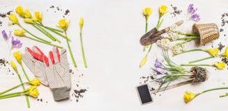 Flores y potes de la primavera, utensilios de jardinería y guantes del trabajo en el fondo de madera blanco, visión superior Imagen de archivo libre de regalías