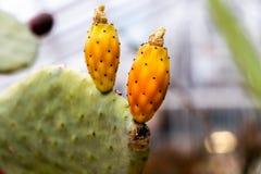 Flores y primer tropicales exóticos de las plantas imagen de archivo libre de regalías