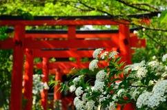 Flores y puertas de la capilla, Kyoto Japón fotos de archivo libres de regalías