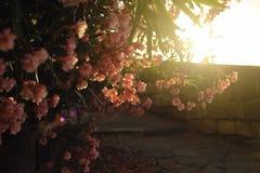 Flores y puesta del sol, naturaleza fotos de archivo