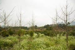 Flores y rama en el campo Fotos de archivo libres de regalías