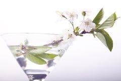 Flores y ramitas de la cereza en un blanco Imagen de archivo libre de regalías