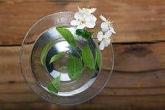 Flores y ramitas de la cereza en una madera Fotos de archivo