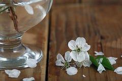 Flores y ramitas de la cereza en una madera Fotografía de archivo libre de regalías