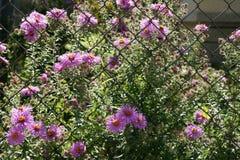 Flores y rejilla Fotografía de archivo
