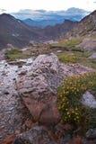Flores y rocas en las montañas rocosas foto de archivo libre de regalías