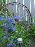 Flores y rueda de carro azules Imagen de archivo