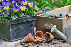 Flores y semilla con los accesorios del jardín Foto de archivo libre de regalías