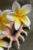 Flores y shell del Plumeria Fotografía de archivo