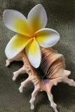 Flores y shell del Plumeria Imagen de archivo