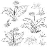 Flores y sistema de la hierba, contornos Fotografía de archivo libre de regalías