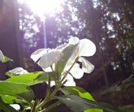 Flores y sol Fotos de archivo
