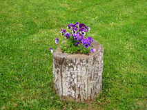 Flores y trozo. Imagenes de archivo